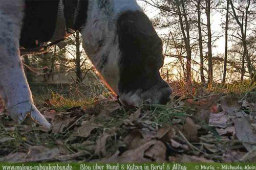 Jan18 Sonnenuntergang Hund Kater Katze Hunde Blog Shar Pei Rabaukenbande Alltag Erziehung Arbeit Training Gehorsam Ausflug Winter Buero Gesundheit mL