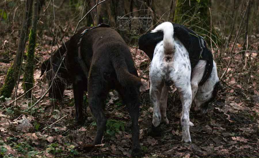 Jan18 Verletzung Hund Kater Katze Hunde Blog Shar Pei Rabaukenbande Alltag Erziehung Arbeit Labrador Wald Ausflug Winter Retriever Schnueffeln