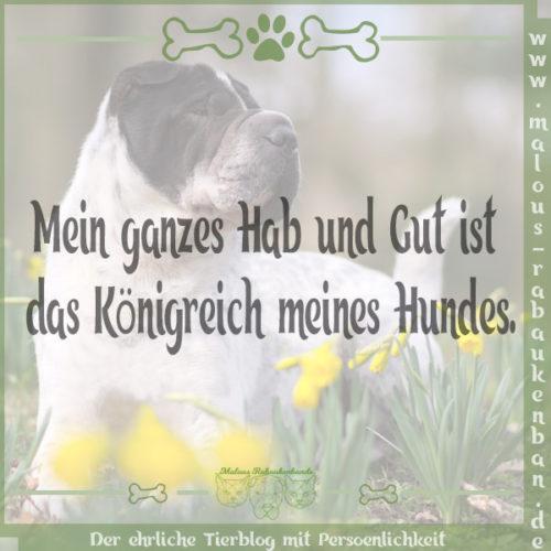 Rabaukenbande Hund Hunde Shar Pei Spruch Blog Koenigreich Hab und Gut Hundeleben Leben mit Tier dog blog Kingston