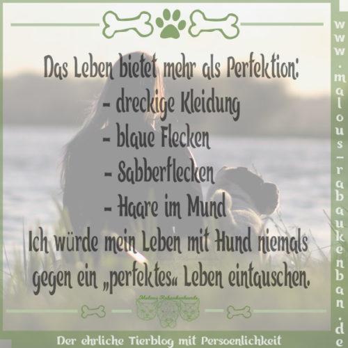 Rabaukenbande Hund Hunde Shar Pei Spruch Blog Perfekt Haare Flecken Sabber Perfektion Hundeleben Leben mit Tier dog blog Kingston