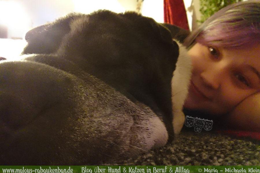Februar Malous Rabaukenbande Shar Pei Kingston Hunde Fotografie Shooting Hund Blog Freizeit Winter Schnee Abenteuer Blumen Alltag Beziehung Schlafen