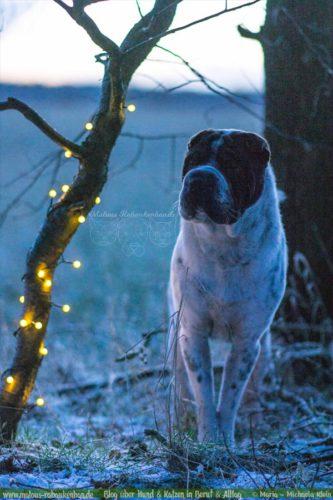 Februar Malous Rabaukenbande Shar Pei Kingston Hunde Fotografie Shooting Hund Blog Freizeit Winter Schnee Abenteuer Blumen Alltag Lichterkette