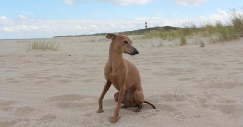 Mi-Doggy-Empfehlung-Warum-du-mit-Hund-Urlaub-machen-solltest