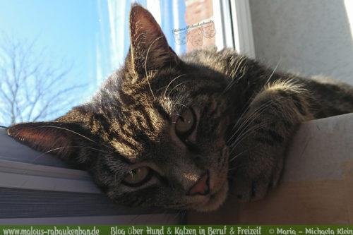 Rabaukenbande Hunde Katzen Blog Shar Pei Freizeit Arbeit Buero , Kater Fenster Entspannen Buerokatze Portraet Erziehung Tipps Erfahrung