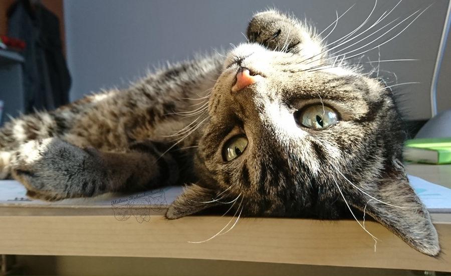 Rabaukenbande Hunde Katzen Blog Shar Pei Freizeit Arbeit Buero , Kater Fenster Entspannen Buerokatze Portraet Erziehung Tipps Erfahrung Spielen Aufmerksamkeit