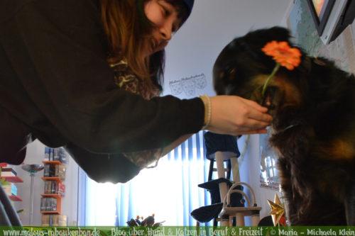 Rabaukenbande Hunde Katzen Blog Shar Pei Freizeit Arbeit Buero , Seelenhunde Herzenshunde Golden Retriever Mischling Gegensaetze Definition Freundschaft Liebe