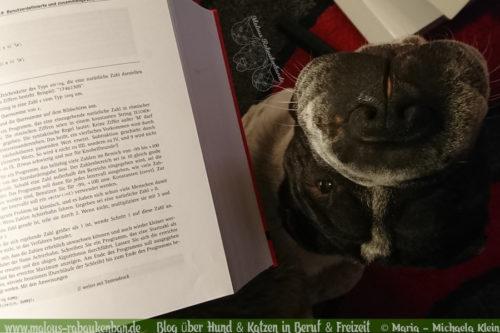 Rabaukenbande Hundeblog Katzenblog Shar Pei Freizeit Spass Arbeit Buerohund , Tagebuch 2018 Schnee Fruehling Winter Sport mit Hunden Ausfluege Lernen Studieren mit Hund