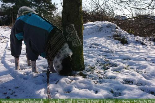 Rabaukenbande Hundeblog Katzenblog Shar Pei Freizeit Spass Arbeit Buerohund , Tagebuch 2018 Schnee Fruehling Winter Sport mit Hunden Ausfluege Winterwonderland