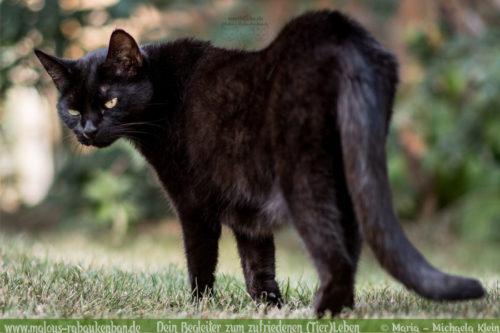 Katzensitter fuer Kater in Urlaub Tier Haltung Blog-Rabaukenbande Cleo Reise machen fuer die Katzen sorgen Urlaub ohne Katzen