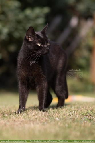 Reise machen Katzen sind zuhause Verpflegen von Tieren im Urlaub Katzenblog-Rabaukenbande Cleo Essen Futter Katzenklo Pension Sitter beschaeftigen