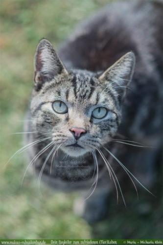 Urlaub machen Katzen Besitzer Blog Empfehlungen zum Aufpassen-Rabaukenbande Tiger Katzensitter Pension Reise machen in den Urlaub fahren ohne Katzen