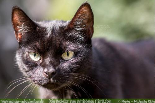 Urlaub machen ohne Katzen Versorgung von Tieren im Urlaub Blogger-Rabaukenbande Cleo Katzensitter oder Katzenpension Hilfreiche Tipps aus Erfahrung