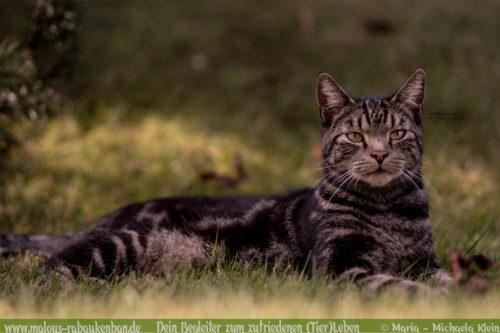 Was tun mit Katzen im Urlaub Tier Blog Hilfe Tipps Ratschlaege zur Katze-Rabaukenbande Kater Tiger Pension anfragen Sitter beauftragen