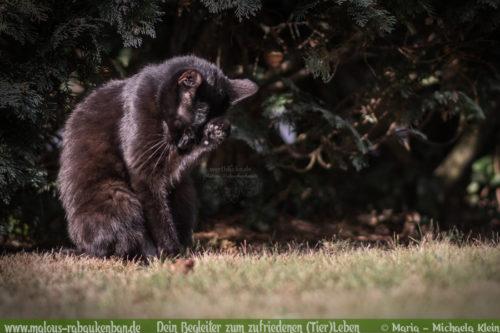 in den Urlaub fahren aber wer kuemmert sich um die Katzen Tierblog-Rabaukenbande Cleo Empfehlungen Tipps Alternativen fuer Katzenhaltung