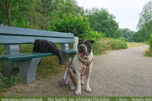 Rabaukenbande Hunde Katzen Blog Shar Pei Freizeit Arbeit Kater Zufrieden Leben-Spazieren Spaziergang Schleppleine Duo mit Hund unterwegs Wandern