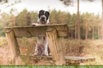 Rabaukenbande Hunde Katzen Blog Shar Pei Freizeit Arbeit Kater Zufrieden Leben-Wandern Spazieren Spaziergang mit Hund unterwegs Heide Wald Fotografieren