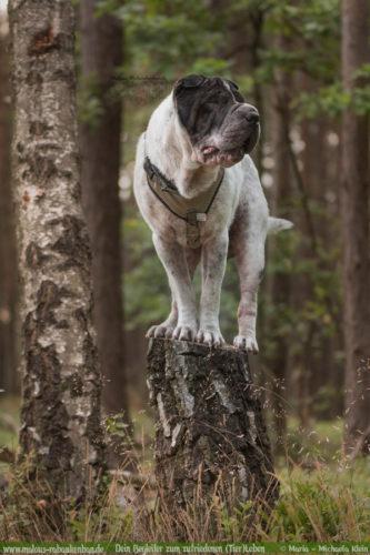 Rabaukenbande Hunde Katzen Blog Shar Pei Freizeit Arbeit Kater Zufrieden Leben-Wandern Spaziergang mit Hund unterwegs Wald Fotografieren Kunsstueck Tricks