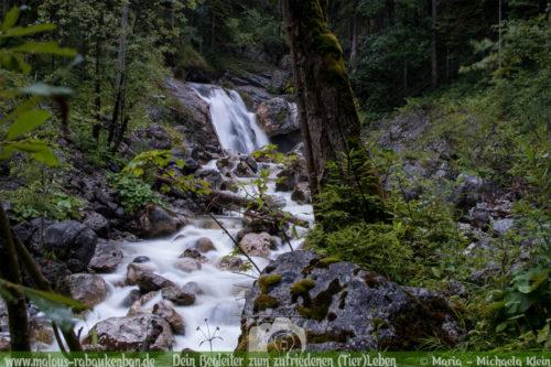 Aktivurlaub in Bayern Wandern im Urlaub-Shar Pei Hundeblog Wald bei den Kuhflucht-Wasserfaellen Ausflug in die Natur