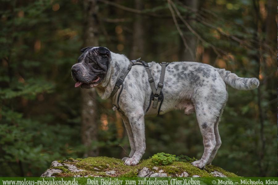 Ausflug mit Hund in die Natur Freizeit Gestaltung-Hunde Blog Haustiere Rabaukenbande Bayern Waelder wandern Shar Pei Naturschutzgebiet