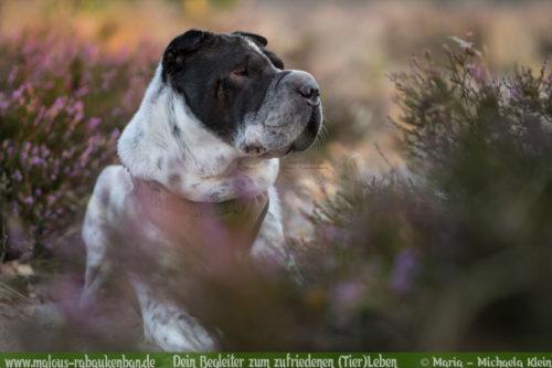 Ausflug mit Hund in die Natur Freizeit Gestaltung-Hunde Blog Haustiere Rabaukenbande Lueneburger Heide wandern Shar Pei Naturschutzgebiet