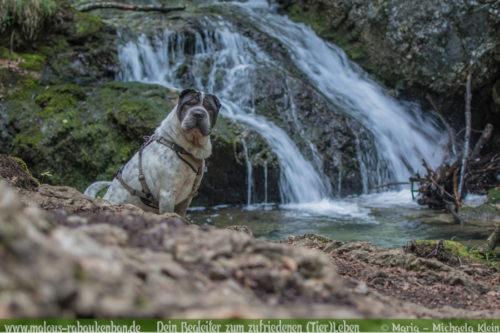 Hundeblog Urlaub mit Hund in Bayern Rabaukenbande-Wasserfall Josephsthaler Wasserfaelle Fischbachau Elbach Miesbach Shar Pei und Wasser Hass Liebe