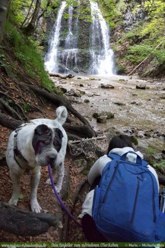Hundefotografie beim Wasserfall in Bayern-Hundeblog aus Niedersachsen mit Shar Pei Fotografin wertblicke Hannover Celle Urlaub Reise