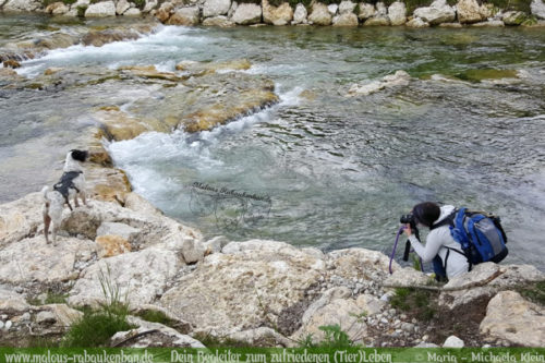 Hundefotografie in Bayern Niedersachsen-Shar Pei am Fluss Hundeblog Bayrischzell Miesbach Abkuehlung nach Wanderung