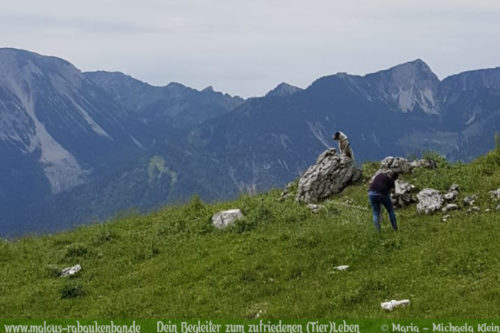 Hundeshooting in Bayern Niedersachsen Shar Pei-Hundeblog Wendelstein Hundefotos mit Bergen Bilder in Oberbayern