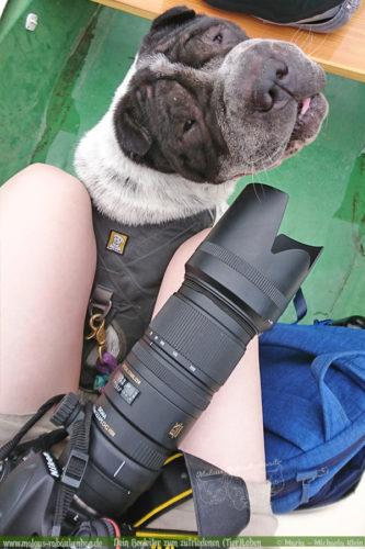Shar Pei Hundeblog Rabaukenbande Urlaub mit Hund-in Bayern auf Reisen mit Hunden in Miesbach Empfehlungen Aktivurlaub Wanderurlaub