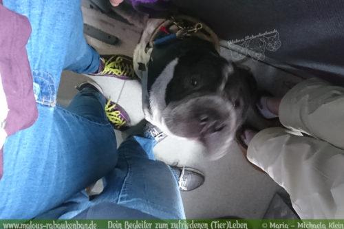 Urlaub in Bayern Bahn fahren Hundeblog-Shar Pei Wendelstein Miesbach Wandern mit Hunden Erziehung Erfahrung sammeln
