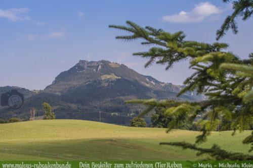 Urlaub in Bayern mit Hunden Empfehlung-Hundeblog mit Shar Pei Rabaukenbande Berge Fischbachau Miesbach mit Hund verreisen Aktivurlaub