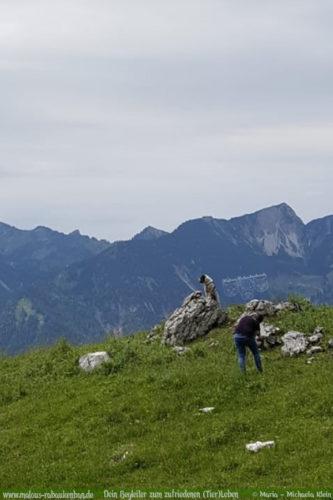 Urlaub mit Hund in Bayern Hundeblog Rabaukenbande-Hund in Bergen fotografieren Fischbachau Verreisen im Sommer Aktiv Wanderurlaub