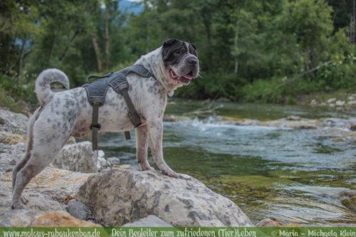 Urlaub mit Hund in Bayrischzell Hundeblog Rabaukenbande-Hund in Bergen fotografieren Oberbayern Verreisen im Sommer Fischbachau Aktiv Wanderurlaub