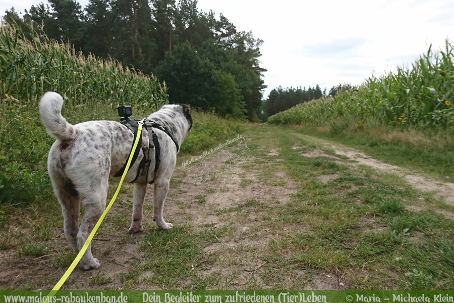 Wandern Filmen mit Hund Blog aus Niedersachsen-Rabaukenbande Go Pros Hundevideo mit Shar Pei Ausflug in die Natur Hunde filmen