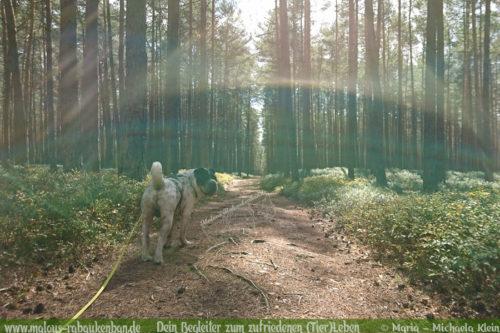 Wandern mit Hund in Niedersachsen im Wald-Hundeblog Rabaukenbande Quality Time mit Tieren freie Zeit auskosten genießen