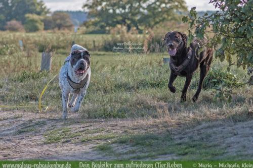 Wie das Gepaeck fuer einen Ausflug mit Hund aussehen sollte-Tiere Katzen Hunde Blog Inhalt Leinen Wasser Erste Hilfe Artikel Geschirr Labrador Shar Pei