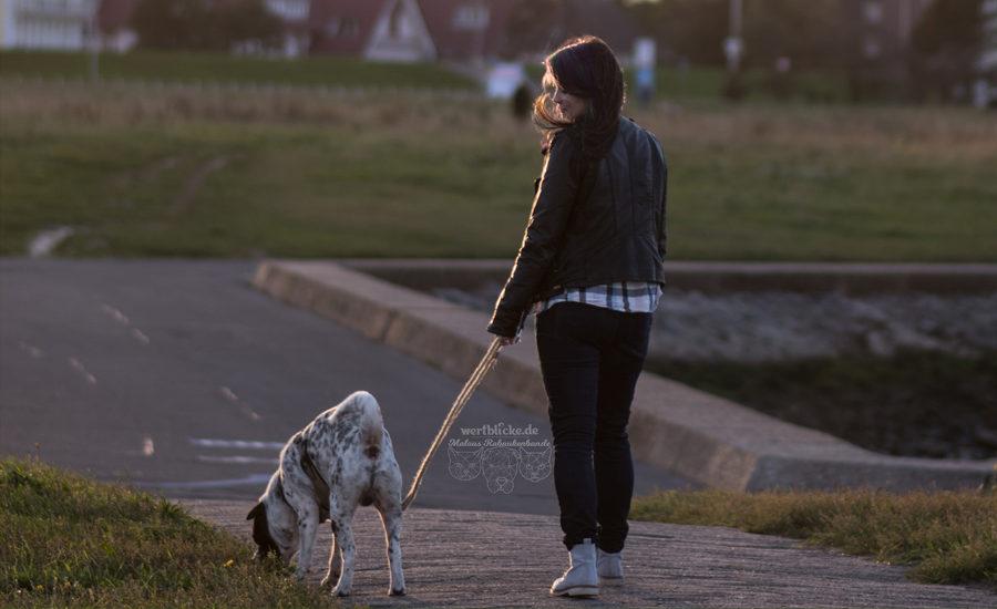 Wie das Gepaeck fuer einen Ausflug mit Hund aussehen sollte-Tiere Katzen Hunde Blog Inhalt Leinen Wasser Erste Hilfe Geschirr