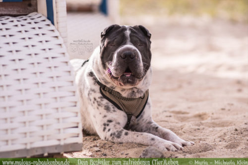 Wie das Gepaeck fuer einen Ausflug mit Hund aussehen sollte-Tiere Katzen Hunde Blog Inhalt Zeckenzange Kotbeutel Leinen Wasser Geschirr