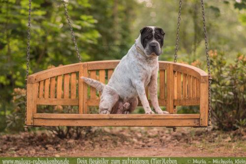 Wirkung von Tabletten gegen Schilddruesenunterfunktion beim Hund-Hundeblog Rabaukenbande Erfahrung mit Krankheit Shar Pei Mut Leben ohne Panik Zutrauen