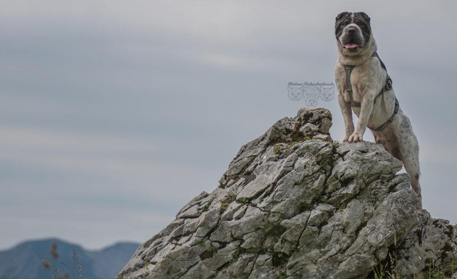 mit Hund verreisen nach Bayern Hundeblog Rabaukenbande-Hund in Bergen fotografieren Fischbachau Urlaub im Sommer auf den Wendelstein wandern
