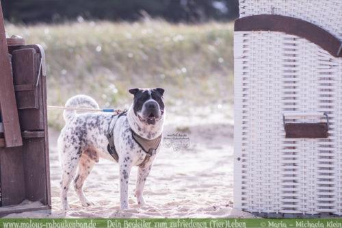 Fotografie Nordsee Hundetreffen Shar Pei Leben mit Hund Blog Blogger-Rabaukenbande fuer Hunde Katzen Tiere Bilder am Strand Spaziergang Niedersachsen Cuxhaven