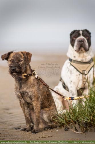 Fotografie Nordsee Hundetreffen Shar Pei Schnauzer Leben mit Hund Blog Blogger-Rabaukenbande fuer Hunde Tier Bilder Spaziergang Niedersachsen Cuxhaven