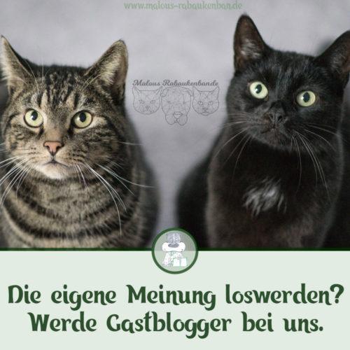 Hunde Katzen Blogger werden Gastbeitrag schreiben-Tierblog Rabaukenbande Haustiere Futter Fuetterung Gegen Vorurteile Roh Trocken Nassfutter Katze Kater