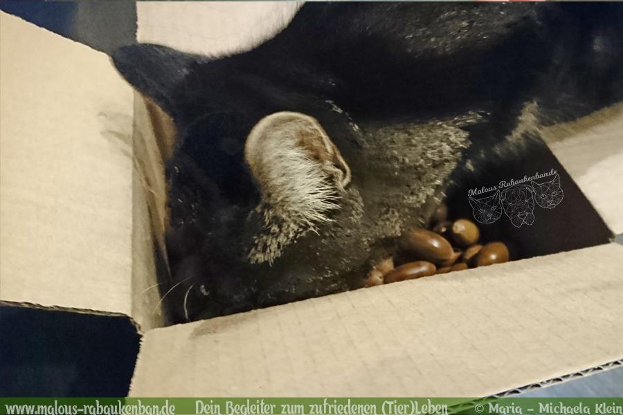 Schnueffeln Spiel Beschaeftigung Herbst Eicheln einfache Anleitung schnell basteln-Tier Blog Hunde Katzen Malous Rabaukenbande zufriedenes Leben Arbeit Freizeit Gesundheit Erziehung