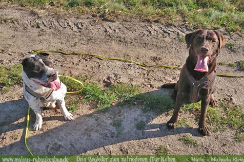 Tagebuch eines Hundes Shar Pei Urlaub Reise mit Hund Haustier-Rabaukenbande Tier Blog Krankheit Fotografie Katzen Labrador Schoko liebe Retriever Freunde