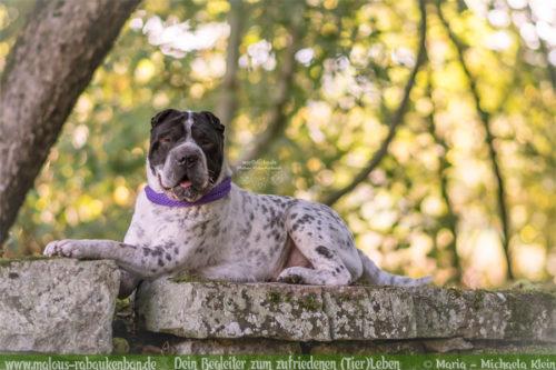 Tagebuch eines Hundes Shar Pei Urlaub Reise mit Hund Haustier-Rabaukenbande Tier Blog Krankheit Fotografie Katzen Labrador Schoko liebe Wald Burgruine