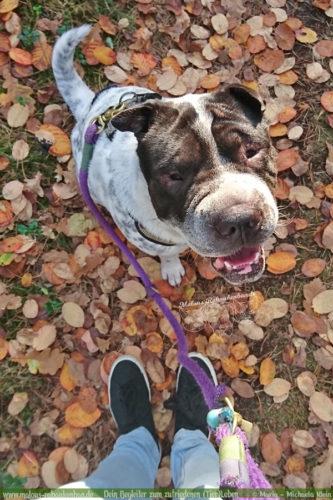 Tagebuch eines Hundes Shar Pei Urlaub Reise mit Hund Haustier-Rabaukenbande Tier Blog Krankheit Fotografie Katzen Labrador Schoko liebe Wald Gesund im Herbst