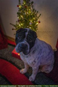 Geschenke Tipps fuer Hunde Liebhaber Weihnachten mit Hund Gewinnspiel Verlosung-Tier Blog Rabaukenbande Begleiter zum zufriedenes Leben mit Katzen Shar Pei