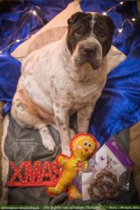 Tipps fuer Hunde Liebhaber Geschenke Weihnachten mit Hund Gewinnspiel Verlosung-Tier Blog Rabaukenbande Begleiter zum zufriedenes Leben mit Katzen Shar Pei