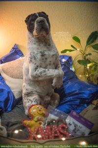 Tipps fuer Hunde Liebhaber Weihnachten Geschenke mit Hund Gewinnspiel Verlosung-Tier Blog Rabaukenbande Begleiter zum zufriedenes Leben mit Katzen Shar Pei